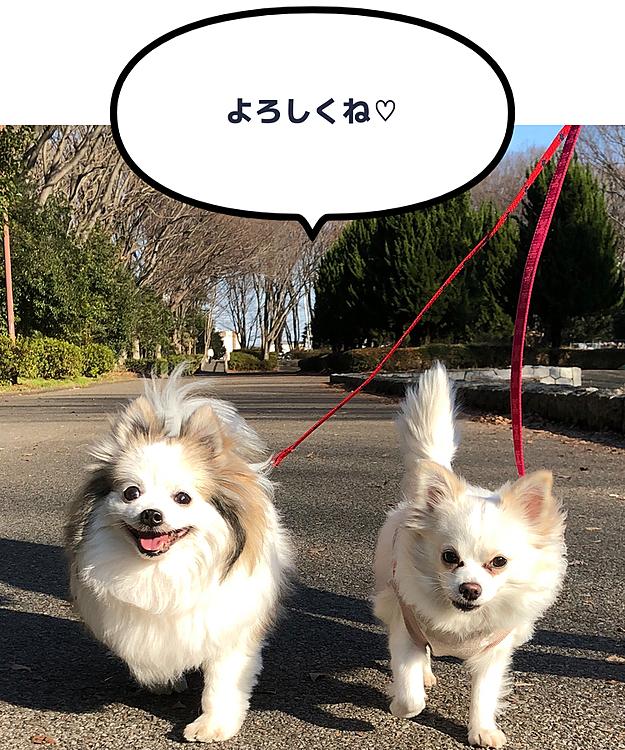 お散歩ルンルン♡