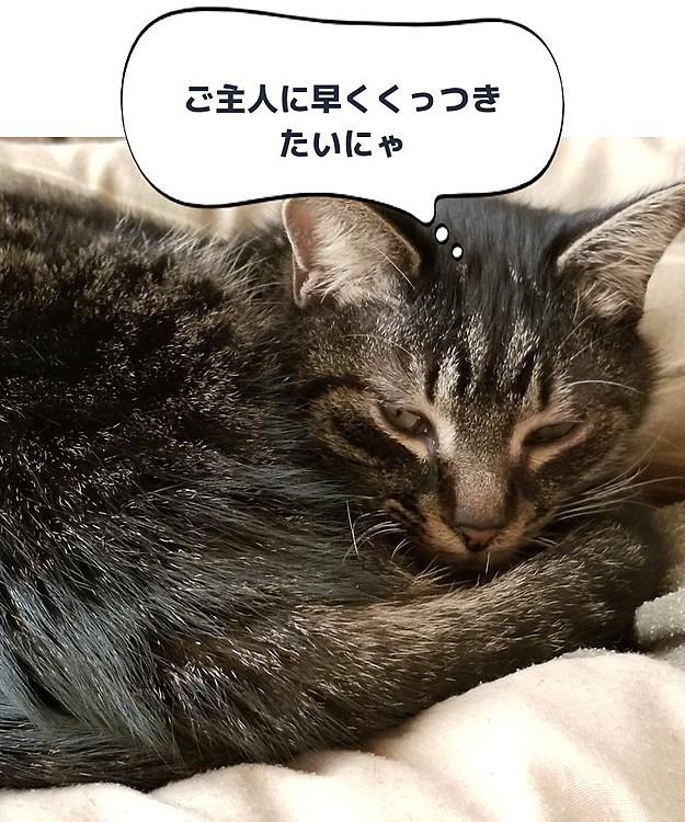 2月22日、猫の日❗ 末っ子のトラ雄君🎵 ちょっと障害持ってるけど人が好きで甘えん坊、 とっても可愛いやつですwww
